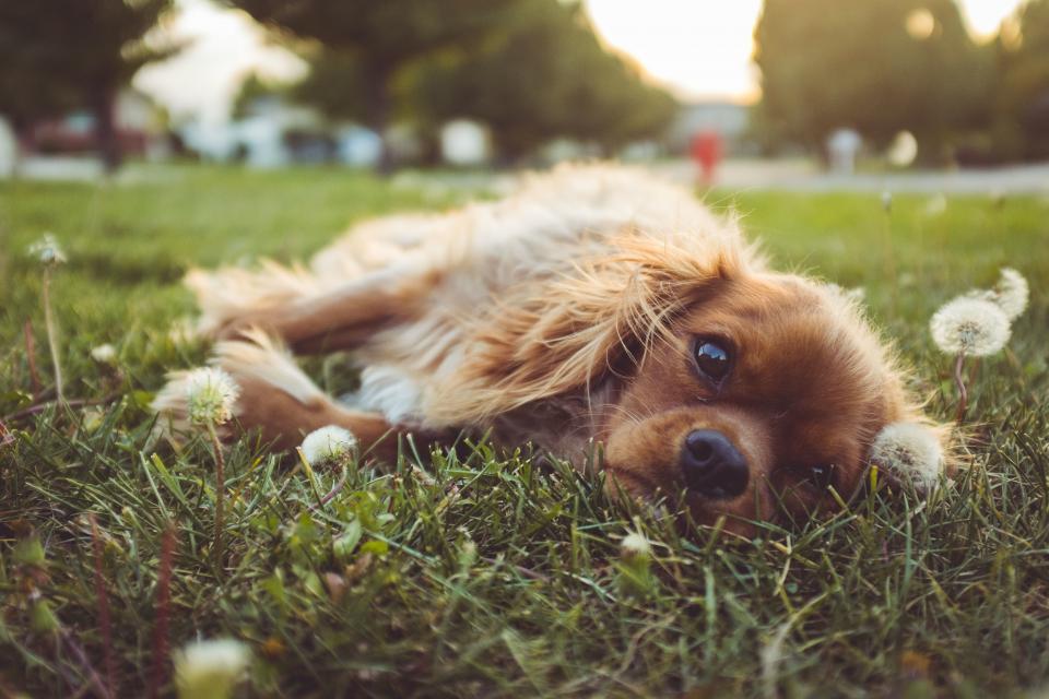 7 prešutnih pravila na pasjoj livadi